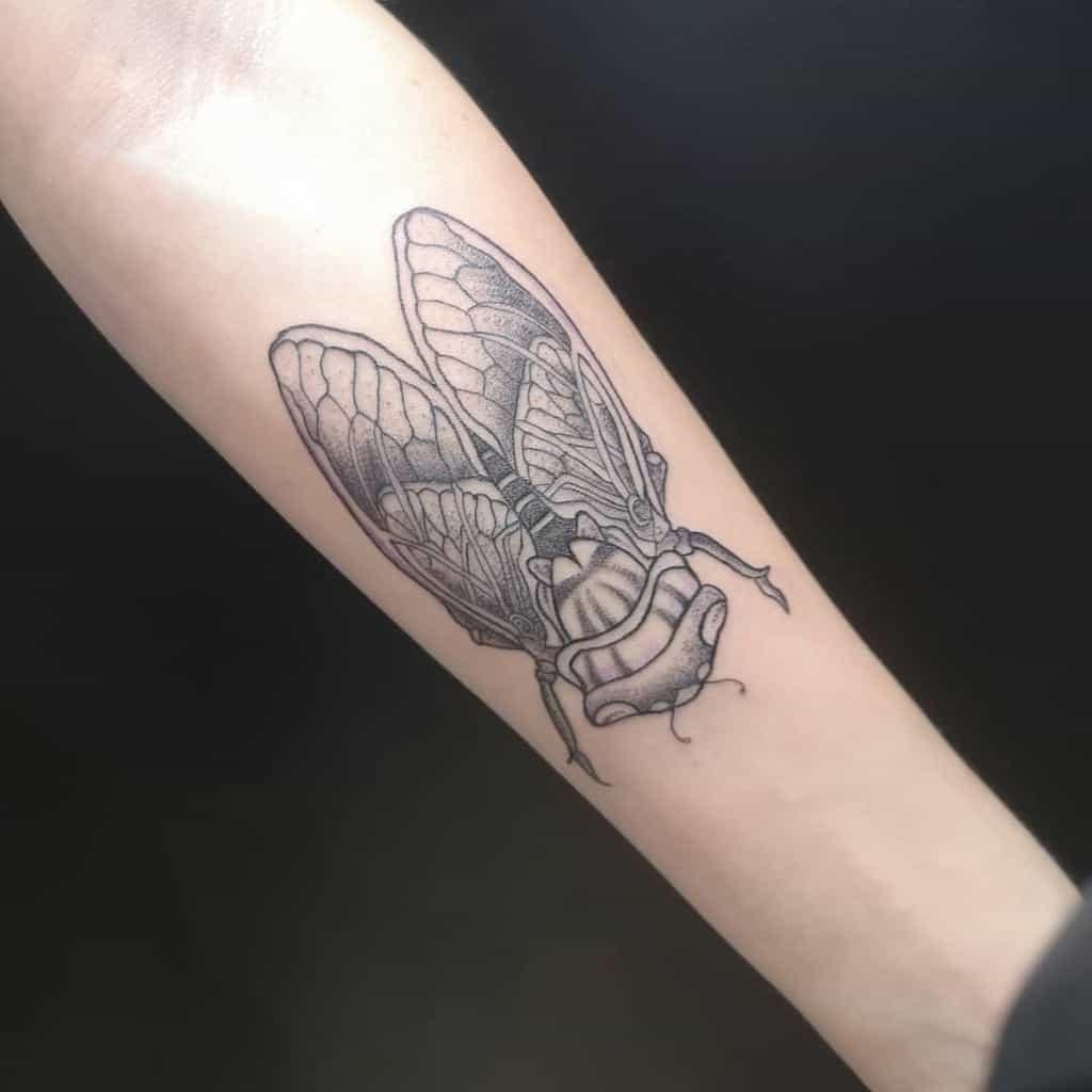 forearm Cicada Tattoos loliflex