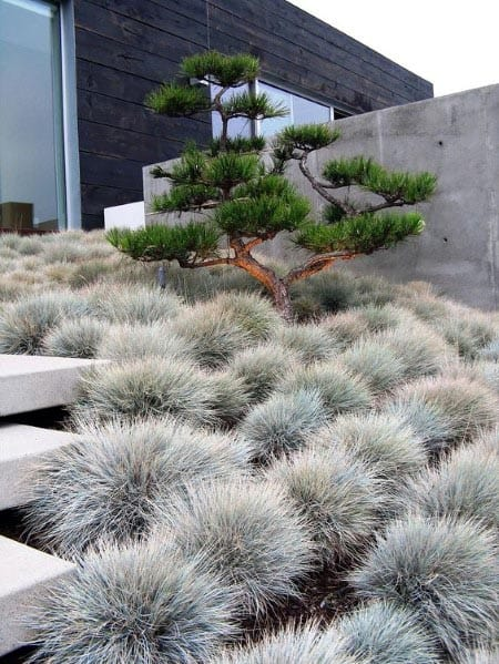 Front Yard Landscape Ideas Desert Plants