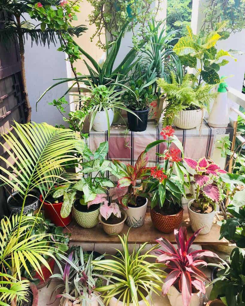 garden apartment patio ideas crazyplantlady11