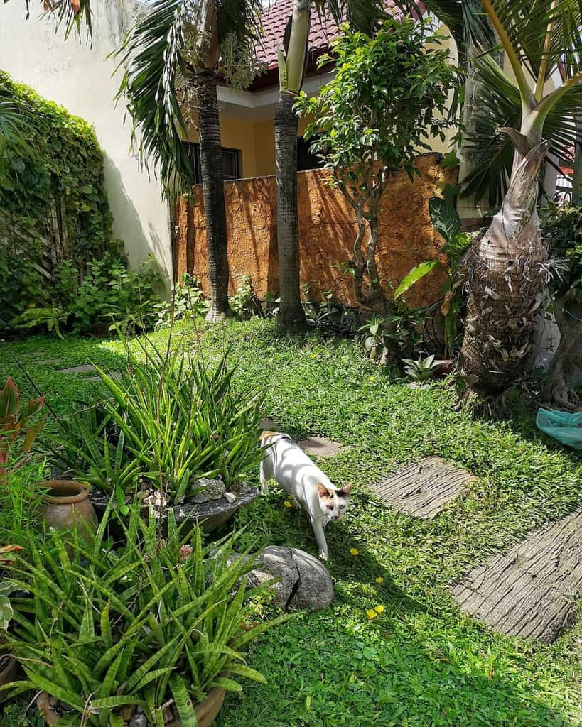 garden small backyard ideas jiezanapone
