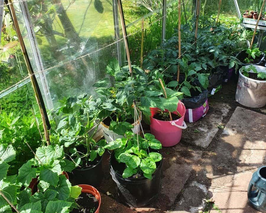 greenhouse vegetable garden ideas paulcresser