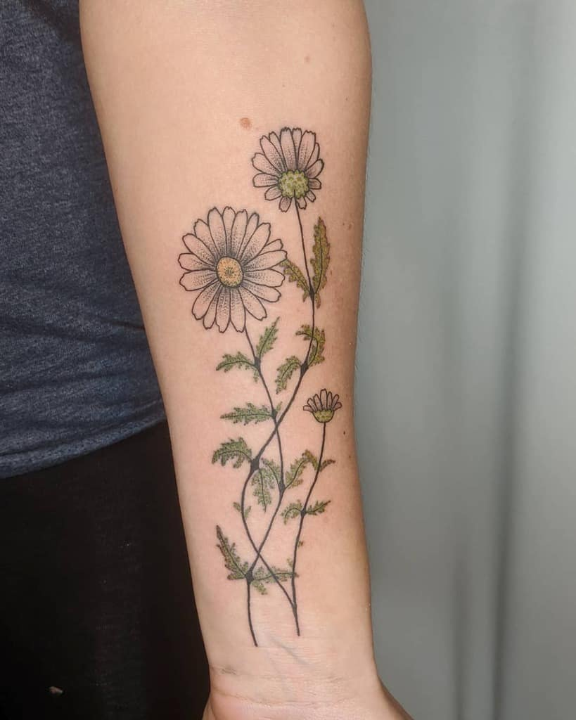Forearm tattoo color growing daisy with leaves