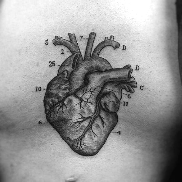 Guys Biology Heart Diagram Science Tattoo On Chest