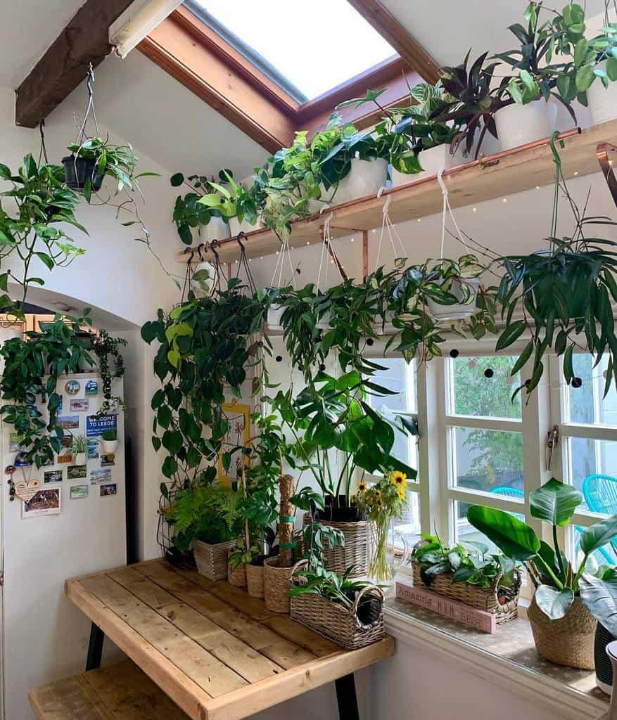 hanging planter indoor garden ideas its_green_up_north