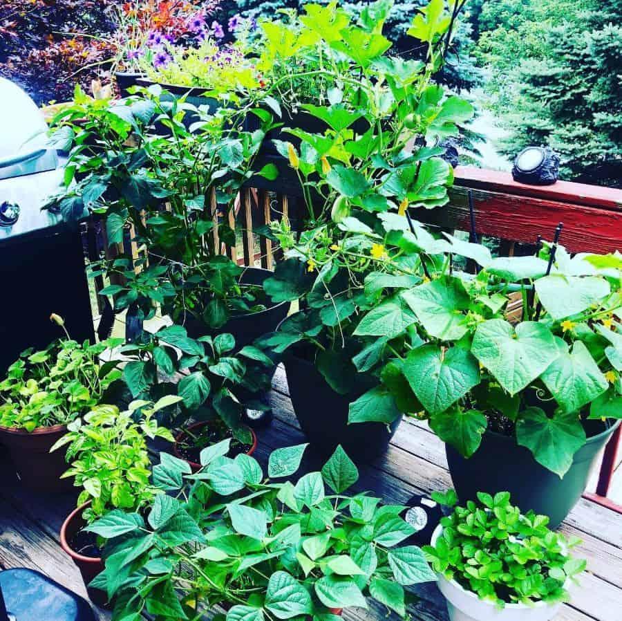 herb and vegetable garden container garden ideas the.plantedhouse