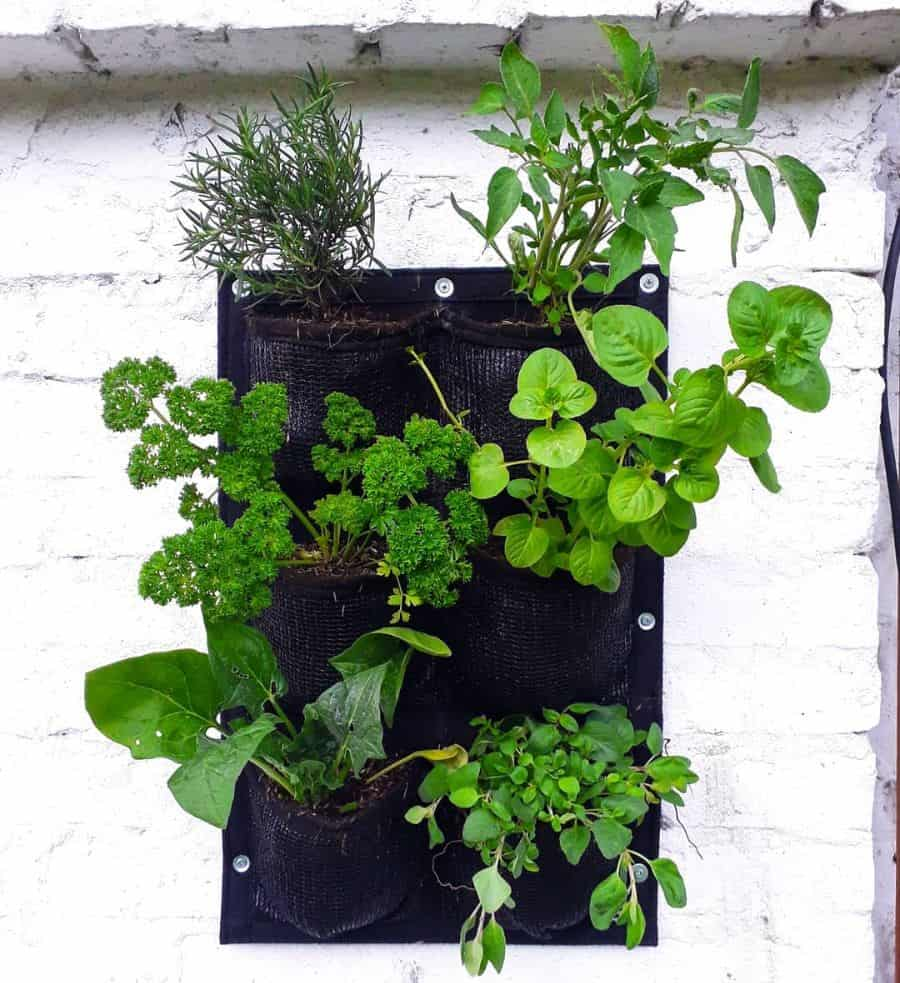 herb garden vertical garden ideas greengardenscol