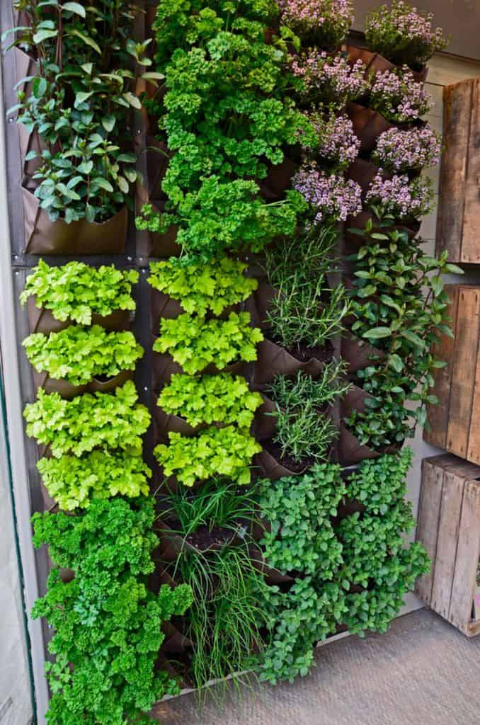 herb garden vertical garden ideas