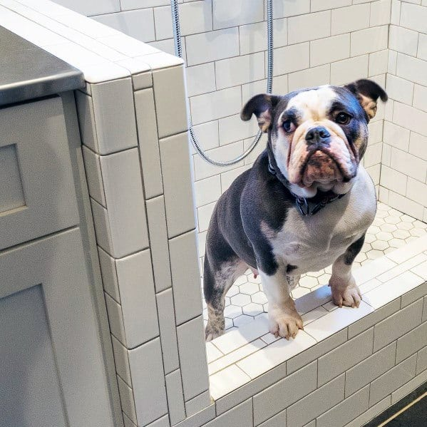 Home Dog Grooming Shower Ideas