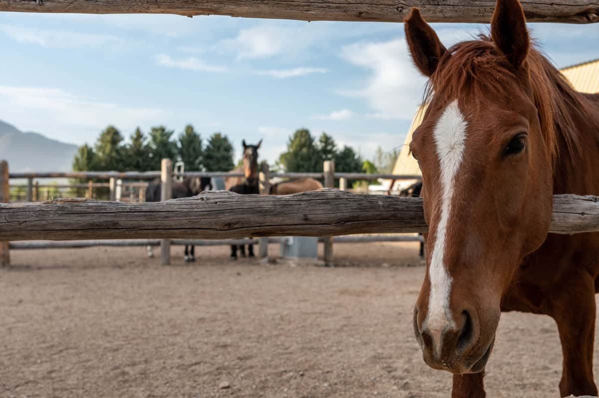 horse-whisper-ranch-17