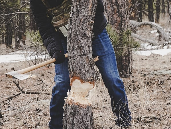 Hults Bruk American Felling Axe Review Pine Tree Chop