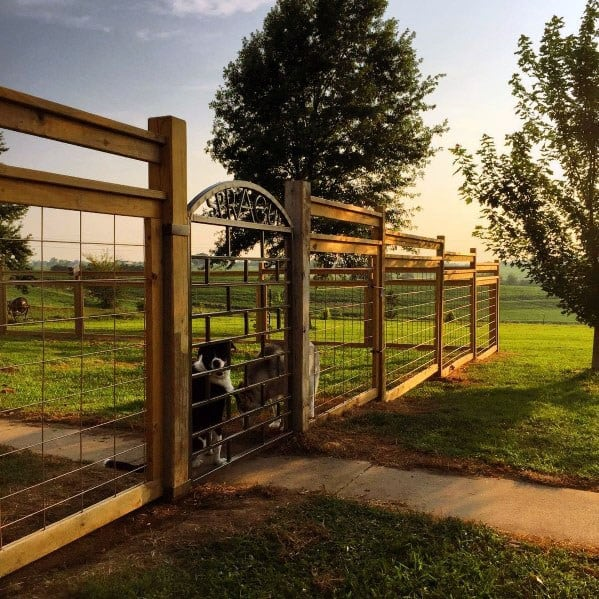 Ideas Dog Fence Metal Gate With Wood