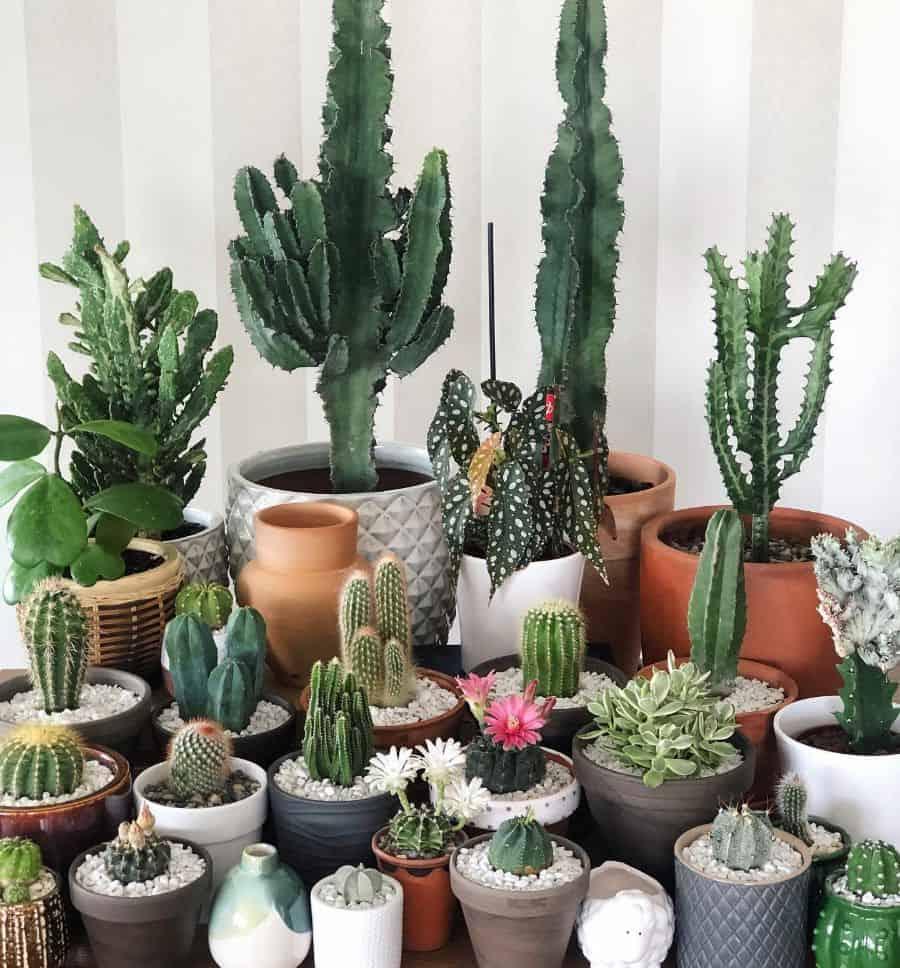 indoor container garden ideas 2 jann.kus