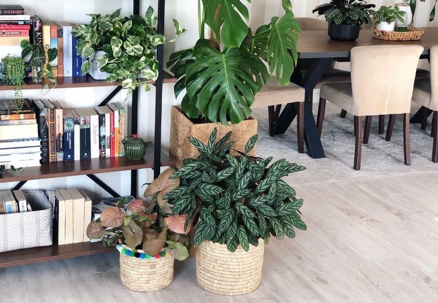 indoor container garden ideas jann.kus