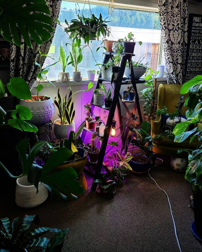 indoor container garden ideas potted.parenthood