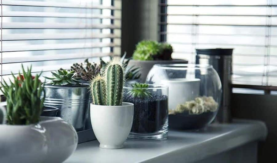 indoor container garden ideas
