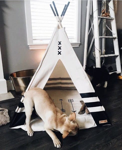 Indoor Tent Dog House Designs