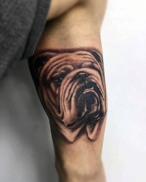 Inner Arm Bicep Bulldog Realistic Guys Tattoo Design Ideas