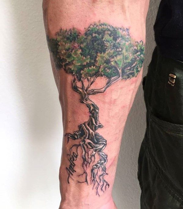 Inner Forearm Mens Cool Olive Tree With Roots Tattoo Ideas