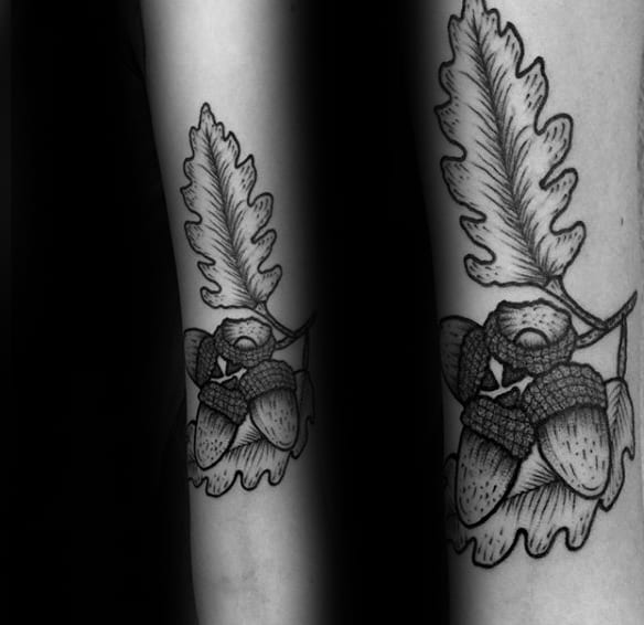 Inner Forearm Tattoo Of Acorns With Oak Leaves On Gentleman