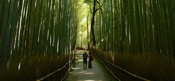 Japan Bamboo Forest