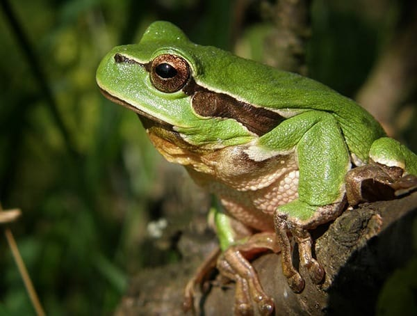 Kiss A Lot Of Frogs List Of Life Lessons For Men