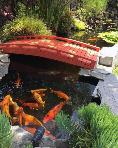 Koi Fish Pond Ideas