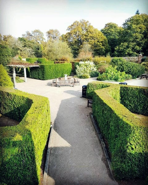 Landscape Hedges Ideas For Gravel Walkway