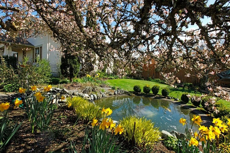 Spring Time Back Yard With Pond And Blooming Tree In Tacoma, WA