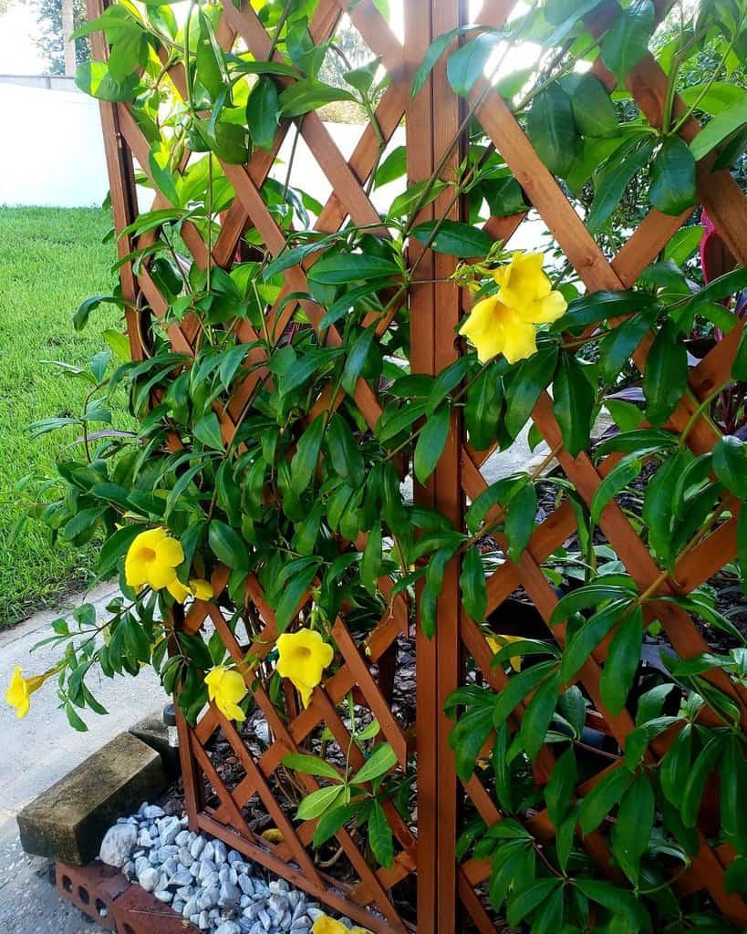 lattice garden trellis ideas sarah_sally.burns