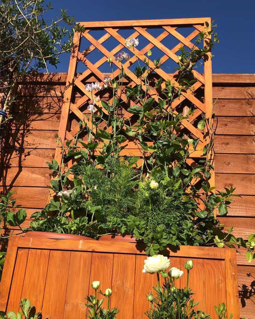 lattice garden trellis ideas thenorfolkgarden