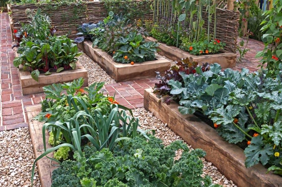 layout vegetable garden ideas 1