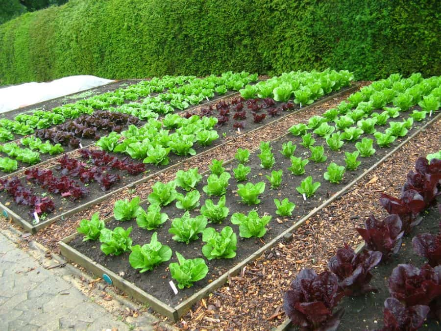 layout vegetable garden ideas 2