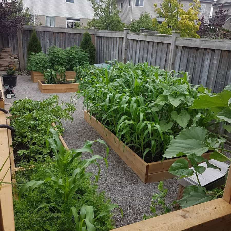 layout vegetable garden ideas we_be_blooming