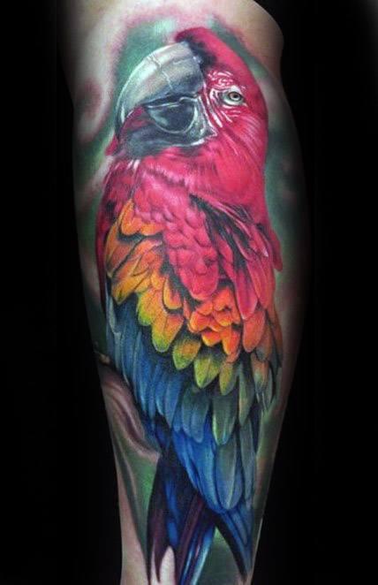 Leg Colorful Parrot Tattoo Design On Man