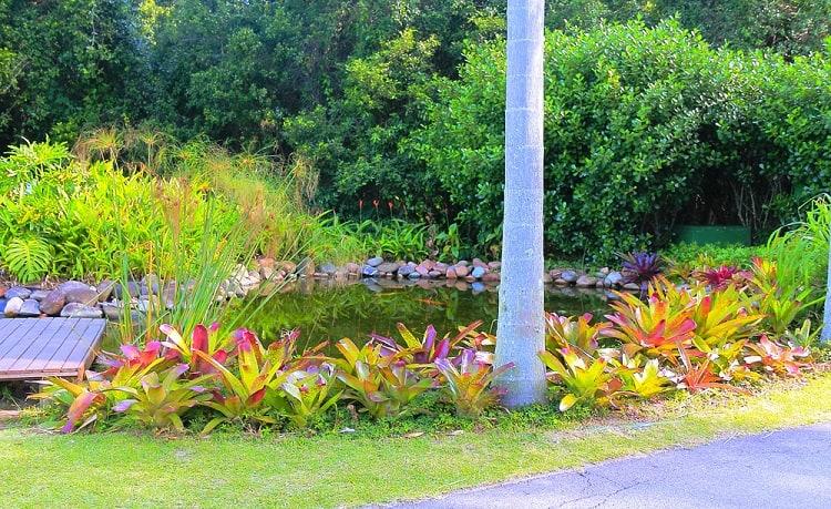 Statuary Plants Backyard Pond Landscaping