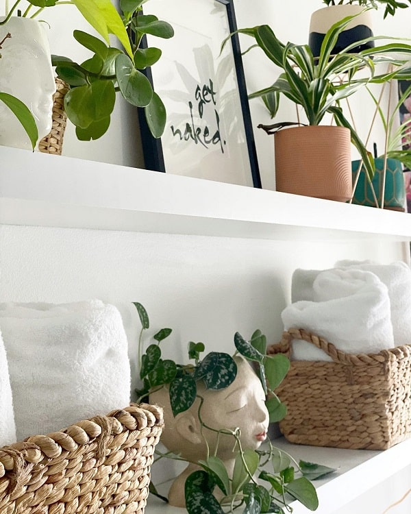 Low Maintenance Plant On Towel Storage Shelf Citytofarmfam