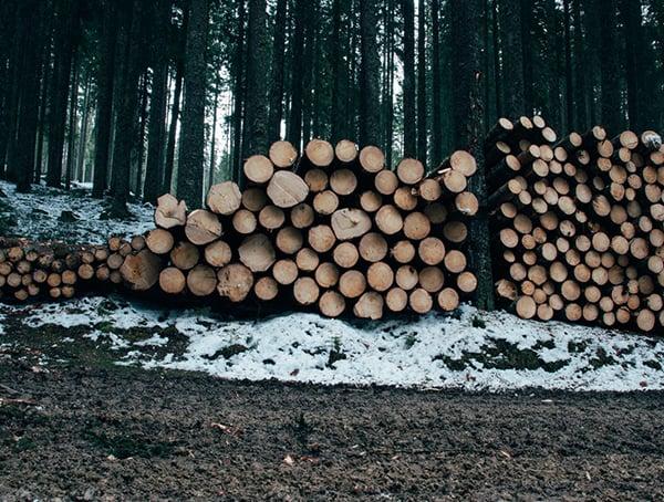 Lumberjack Jobs In The Outdoor Industry