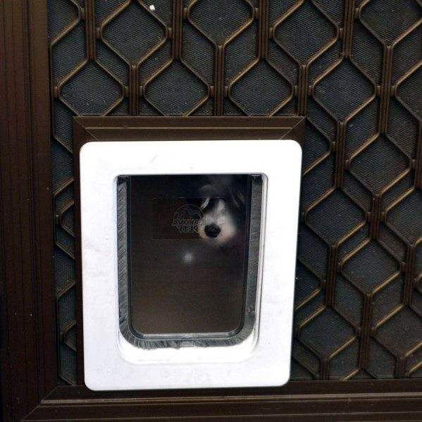 Luxury Doggy Door Ideas