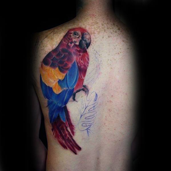 Male Tattoo With Parrot Design Half Back