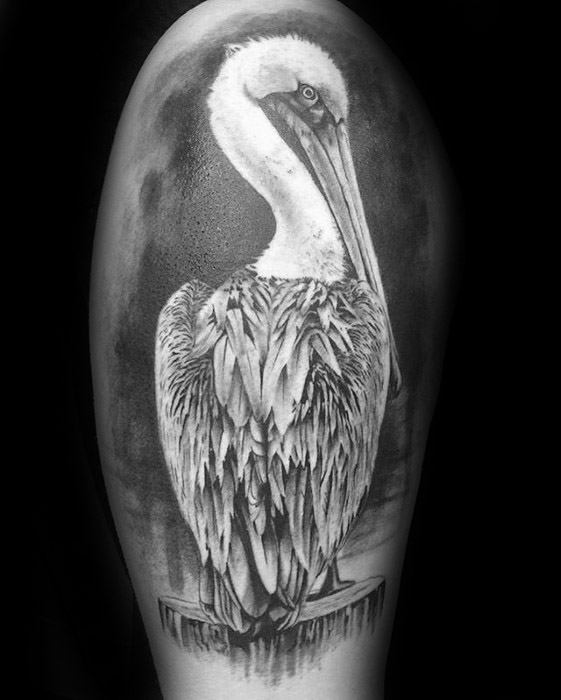 Male With Cool Pelican Tattoo Design On Arm