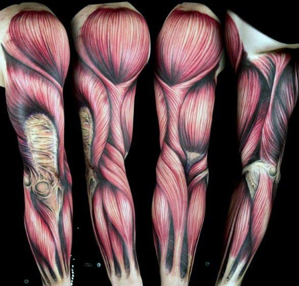 Manly Anatomical Tattoos For Males