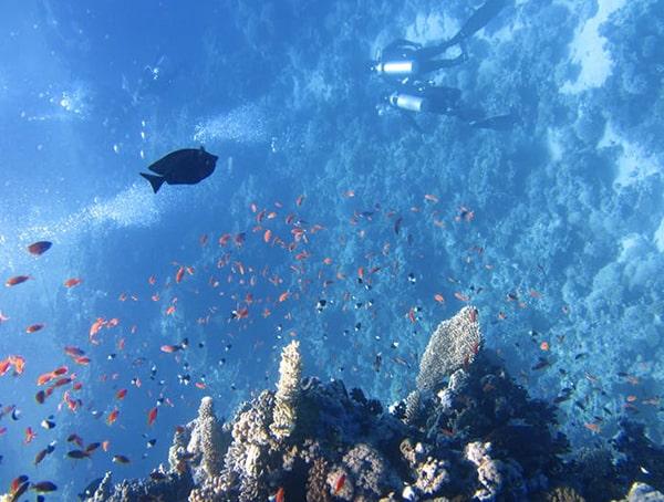 Marine Biologist Outdoor Careers