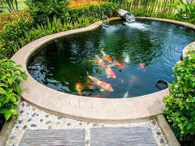 Medium Sized Backyard Koi Pond