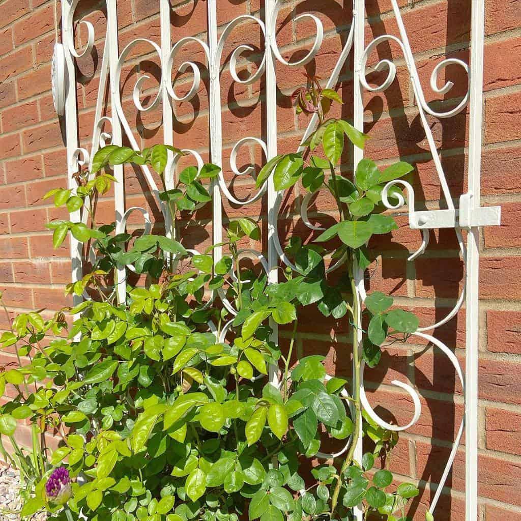 metal garden trellis ideas littlenurturedgarden