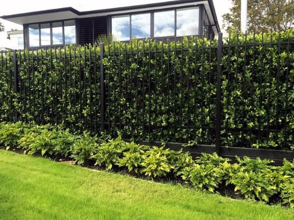 Metal With Hedge Backyard Privacy Fence Design