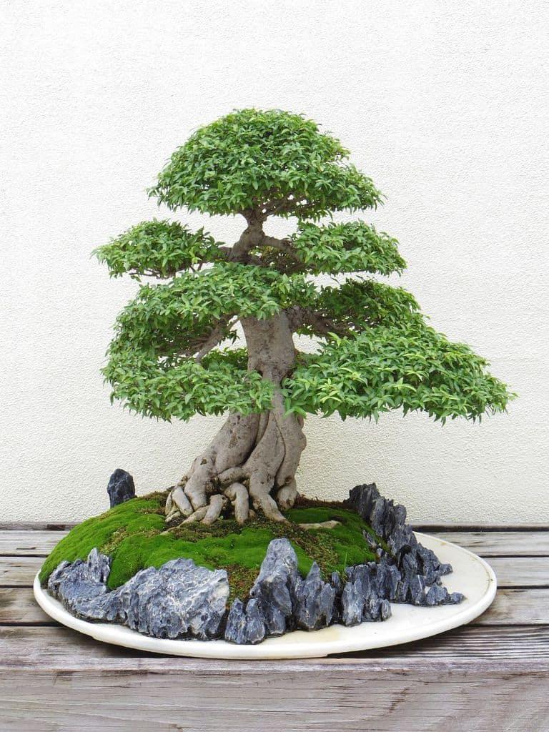 mini zen garden ideas 1