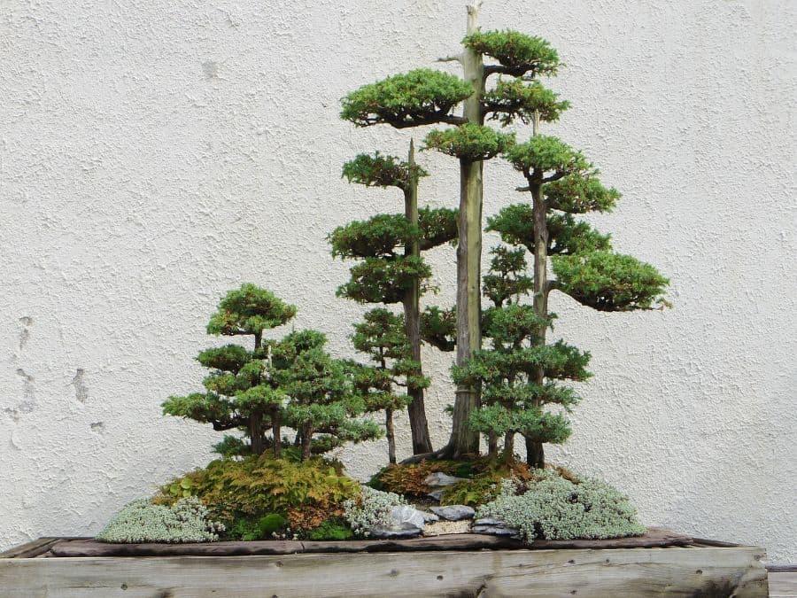 mini zen garden ideas 2