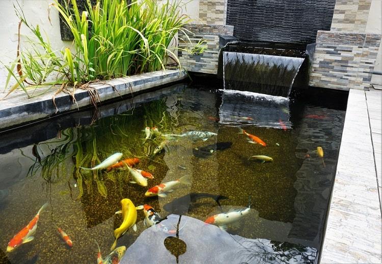 Minimalist Rectangular Backyard Koi Pond