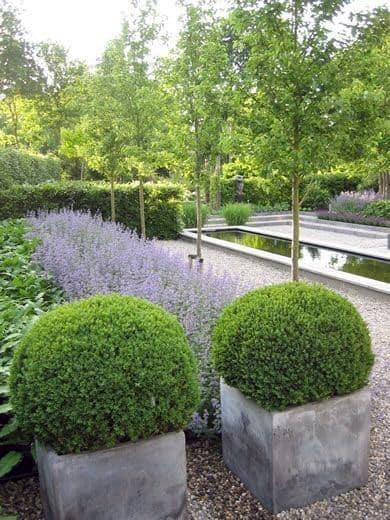 Modern Landscape Design Plants