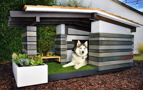 Big Modern Dog House